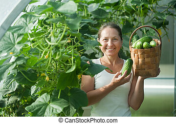woman harvesting cucumbers - Mature woman harvesting...