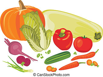 Vegetables isolated on the white. Vector illustration