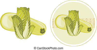 Zucchini and cabbage. Label for design. Vector illustration