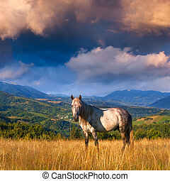 White horse in the mountains