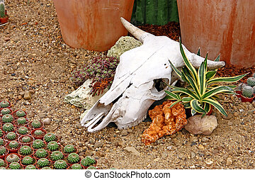 Cow skull as a decorative element in the garden
