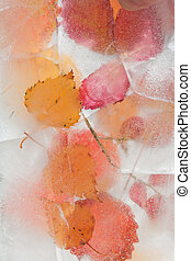 icy plants - flora frozen into ice, autumn changing into...