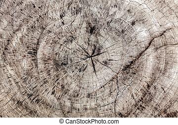 Old brown tree cross cut texture - Old brown tree cross cut...