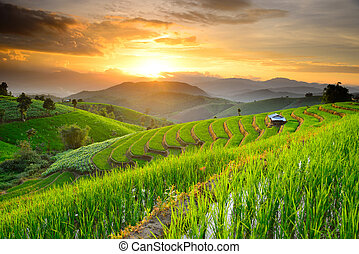 Rice Terraces in Northern of Thailand - Rice Terraces with...