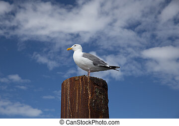Seagull on Rusted Metal Piling with Blue Sky and White Puffy...