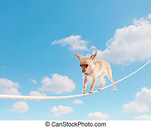 Dog balancing on rope - Image of little dog balancing on...