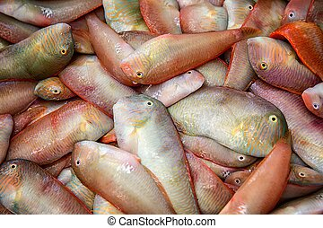 Fresh caught seafood - Freshly caught sea fish for sale at a...