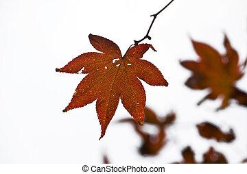 Herbst - Jinhae im Herbst