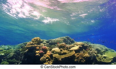Waves of the sea over the coral reef