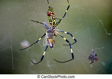 Spider - Jinhae im Herbst