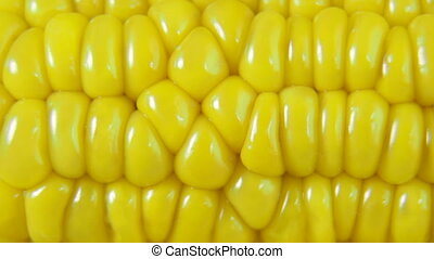 DOLLY: Fresh Corn - Ear of fresh corn with irregular rows of...