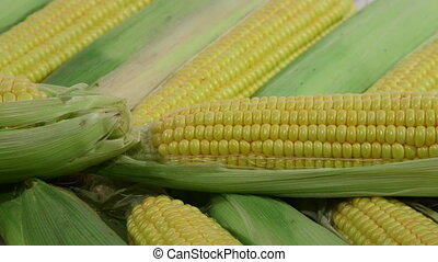 Row of Sweet Corn In Market