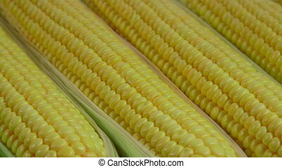 Sweet corn background, dolly shot