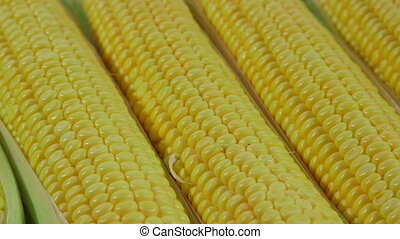 DOLLY: Fresh sweet corn - Fresh sweet corn on the cob in...