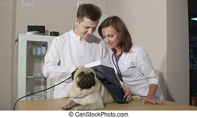 Dog Checkup At Animal Clinic - Friendly vets examining pug...