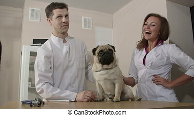 Veterinarian Examining Pug Dog - Veterinarian with assistant...