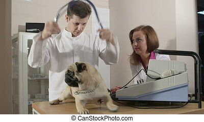 Vet Examining Pug Dog at Animal Clinic  - Using Stethoscope