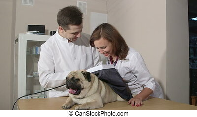 Dog Checkup At Animal Clinic