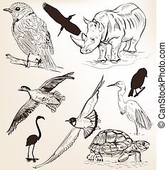 Collection of hand drawn vector detailed animals for design...
