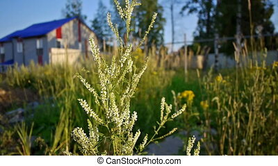 Summer meadow flowers - Summer meadow grass and flowers