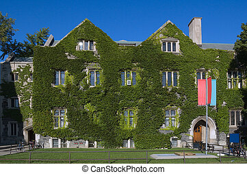 old building - wall of old building, covered by ivy in...