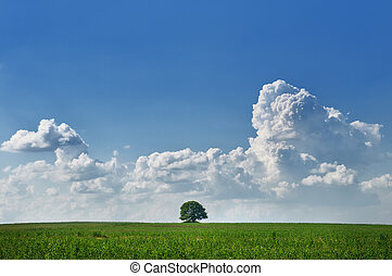 Lone tree - Landscape with lone tree in the field with sky...