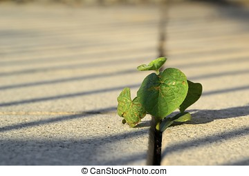 Fight for survival - a plant growing between paving stones