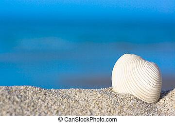 Shell on the beach - Shell on the tropical beach.