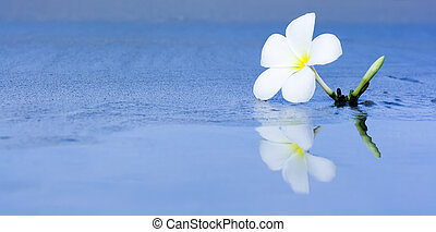Tropical flower on the beach - Reflection of tropical flower...