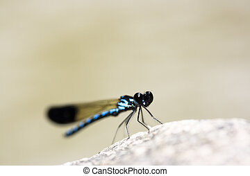 Dragonfly close-up. - Dragonfly sitting on the stone with a...