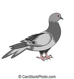 A pigeon on a white background Vector-art illustration