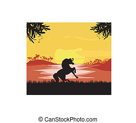 silhouetted horse  on sunset