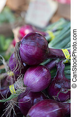 Bunches of Organic Purple Onions With Roots For Sale at the...