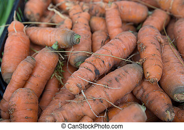 Fresh Organic Carrots for Sale at the Farmers Market - Fresh...