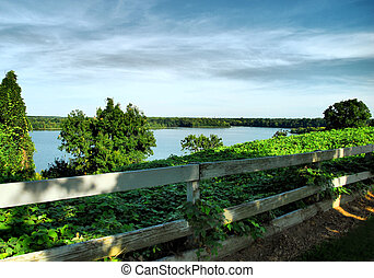 Kudzu Fenceline - Photograph taken at Cooters Pond and Park...