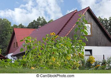 Sunflowers at a farmhouse in the Spreewald - The Spreewald...