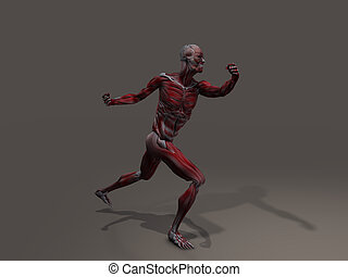 Male Musculature in Action