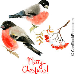 Watercolor bullfinch and ashberry Vector illustrations
