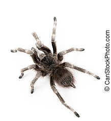 spider on white table. macro view.