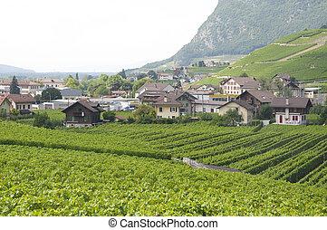 Houses amidst Vineyards - Houses amidst vineyards in Aigle,...
