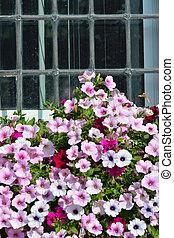 flowers below window