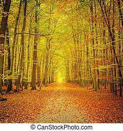 Autumn park - Pathway in the autumn park