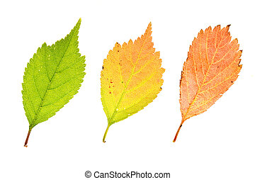 Colorful  leaves of ??????