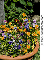 Potted Flowers - Terra Cotta Pot with a mixture of colorful...