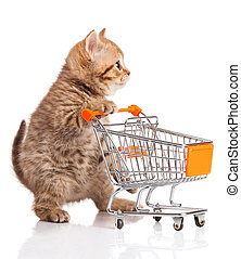 british cat with shopping cart isolated on white. kitten...