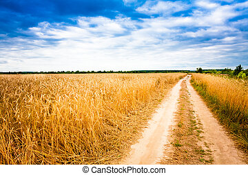 Rural Countryside Road Through Fields With Wheat