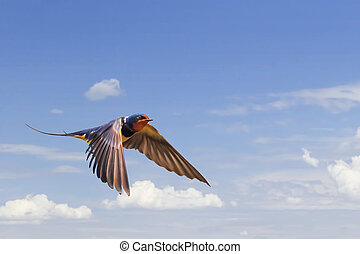Swallow In Flight On Blue Cloudy Skies - Photograph of...