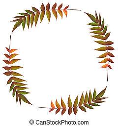 Rowan Leaf Beauty - Rowan ash leaf abstract in autumn...
