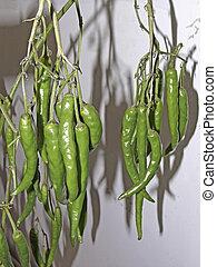 Green Common Chilis, Capsicum annuum on plant