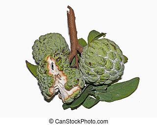 Custard apple, Annona reticulata, Annona squamosa